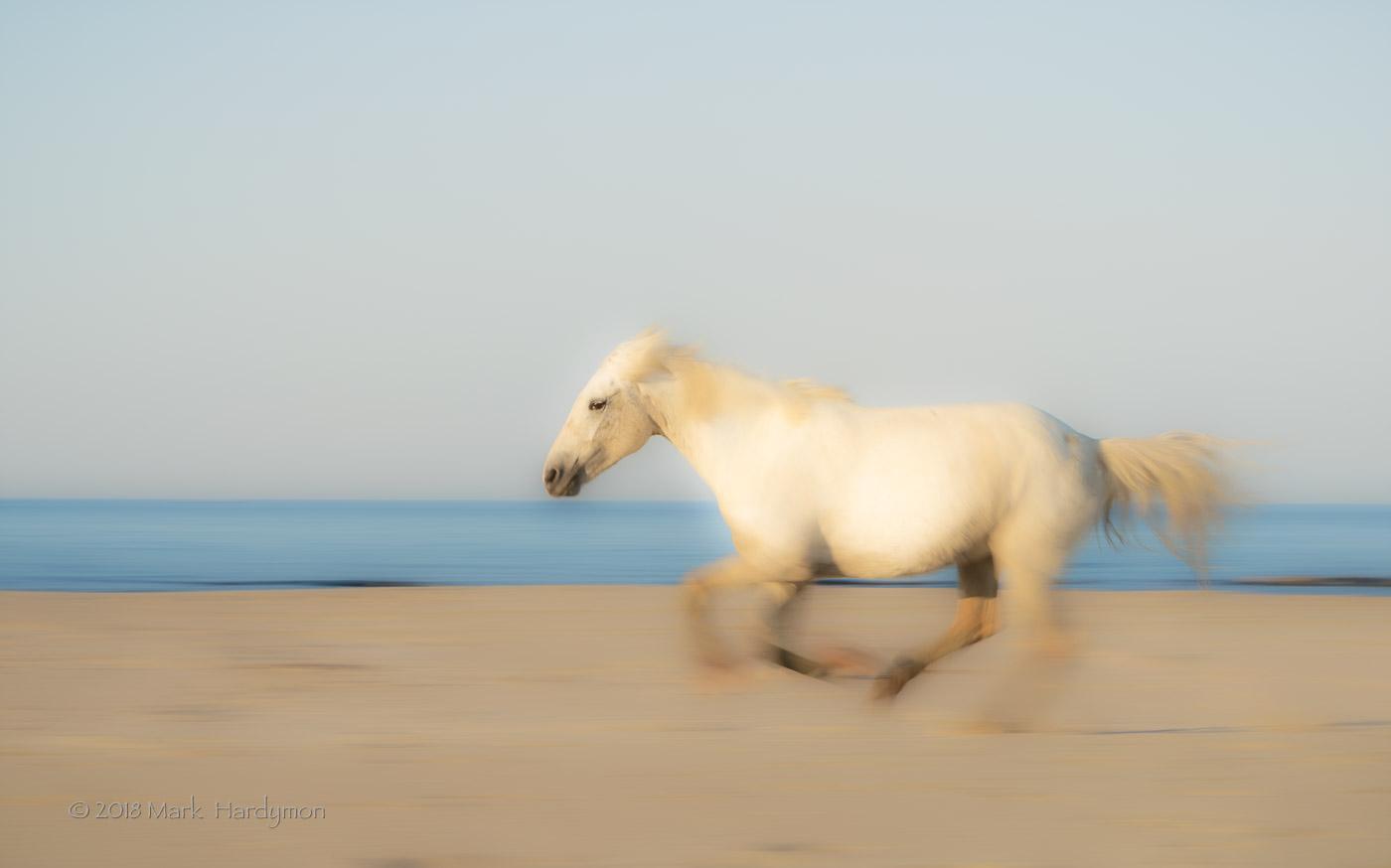 horses_3-7448-Edit