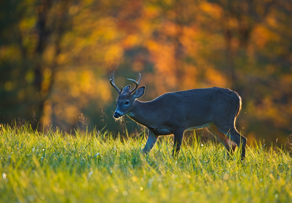 Oct_Deer_MHH6874-Edit-1024x713.jpg