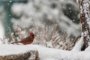 Snow Birds-0141