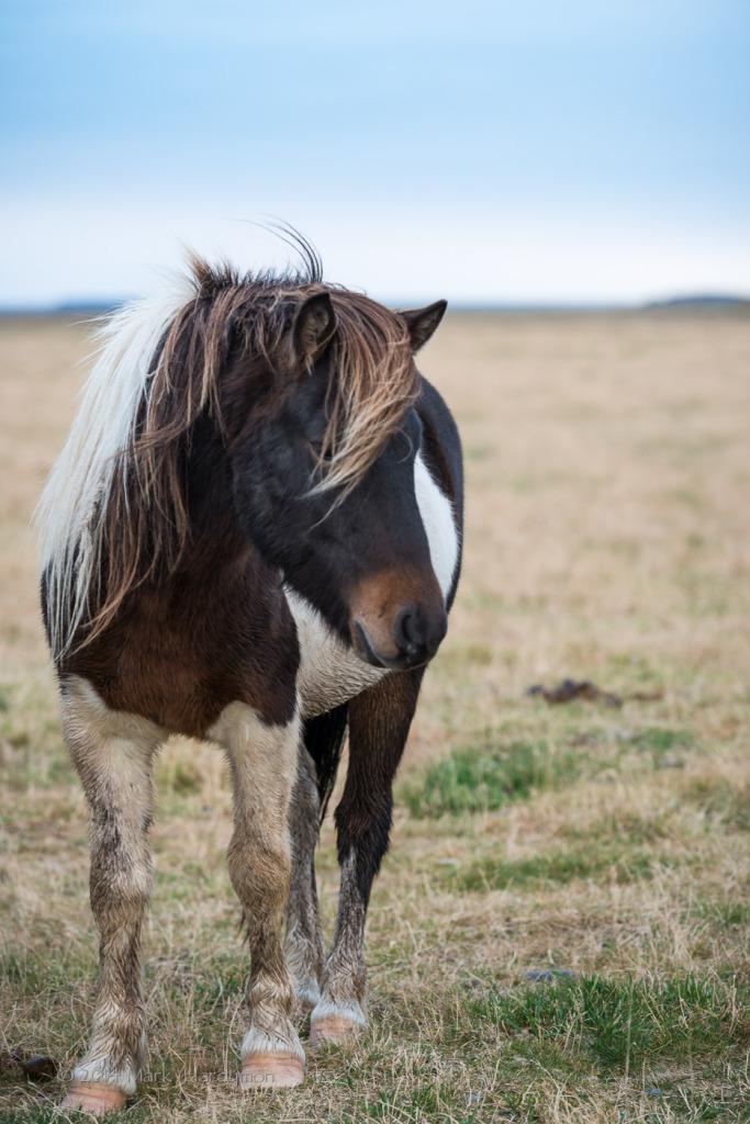 horses-4520-683x1024.jpg