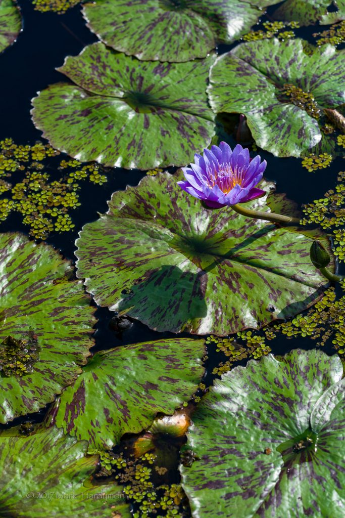 naples_botanical_gardens-3678-683x1024.jpg