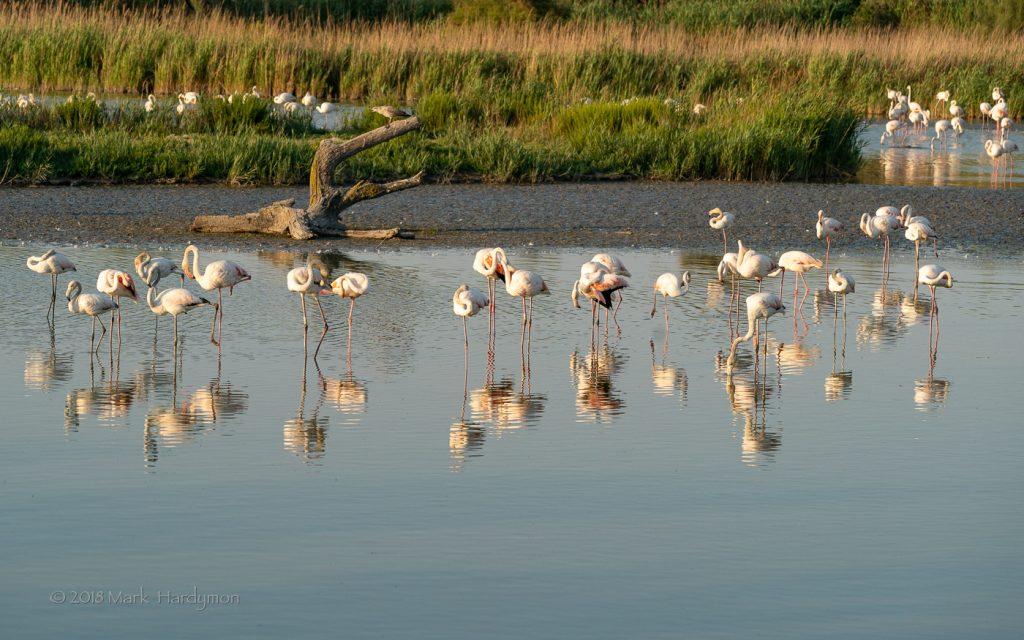 camargue_flamingo-3144-1024x640.jpg