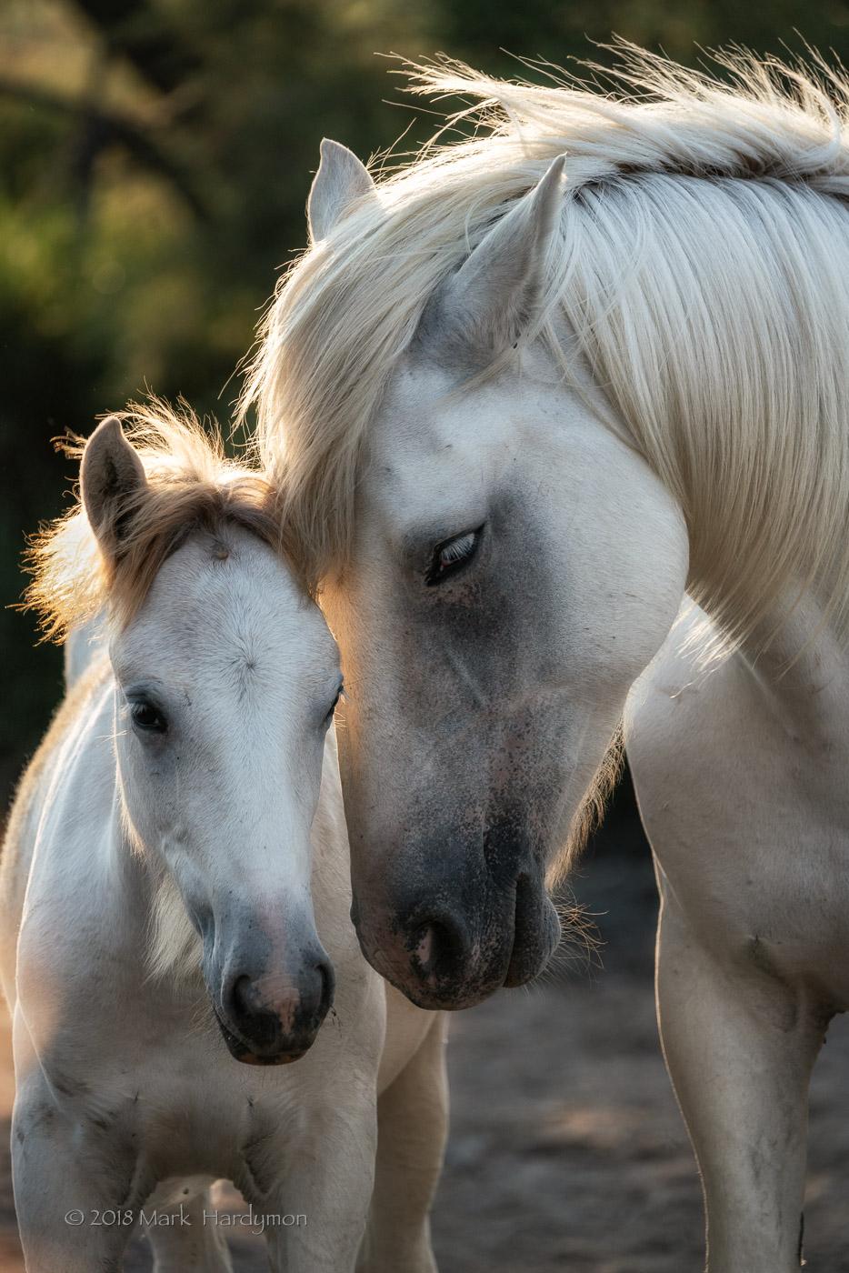 horses_bulls-8052-Edit.jpg