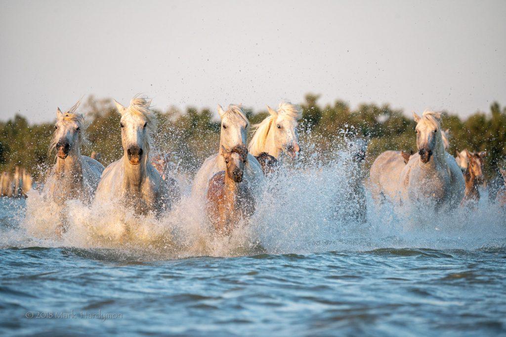 horses_bulls-8398-Edit-1024x683.jpg