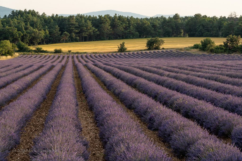lavender_fields-0857-Edit-1024x683.jpg