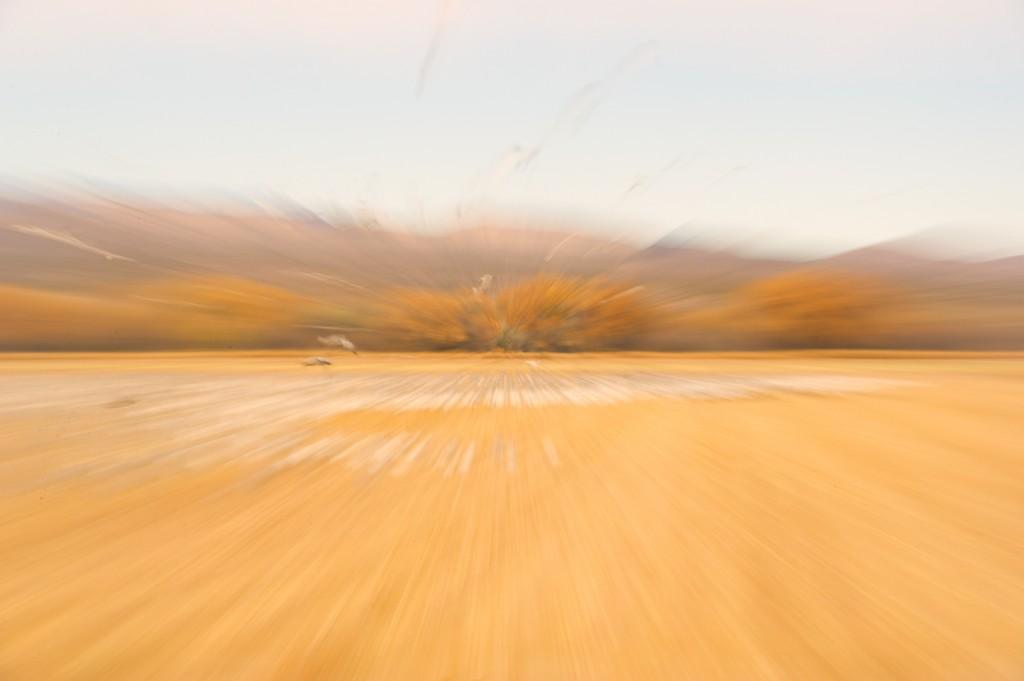 Nov-10-Bosque-5-A.M.-_MHH9066-Edit-1024x681.jpg