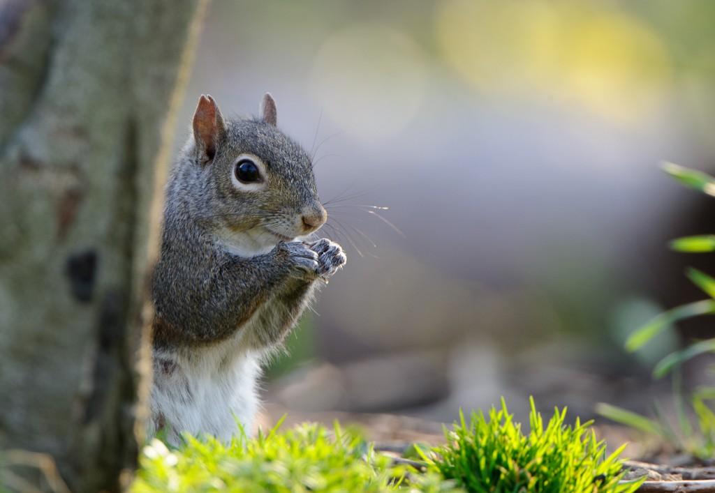 DaffsSquirrel_MHH2316-Edit-1024x707.jpg