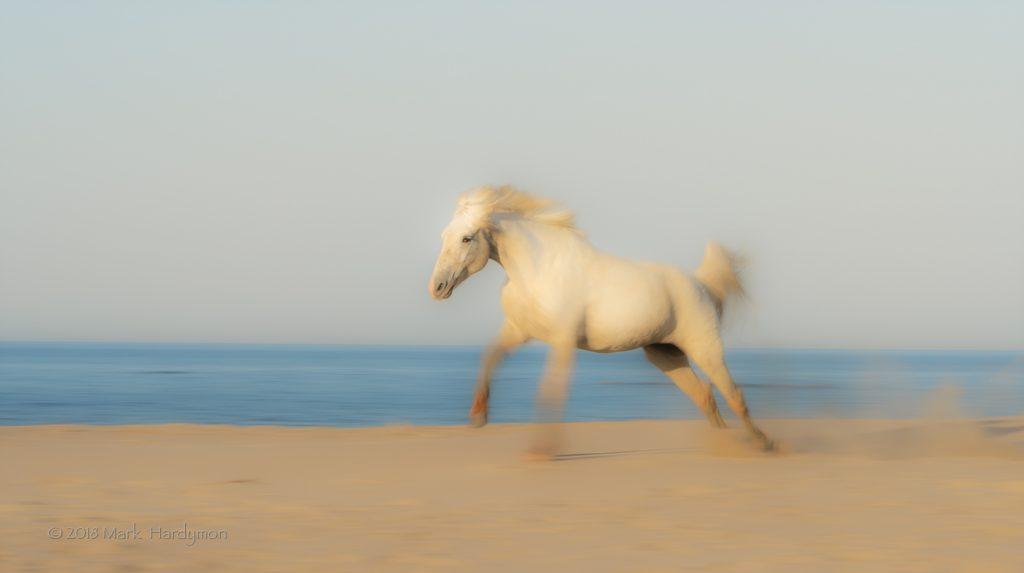 horses_3-7467-Edit-1024x573.jpg