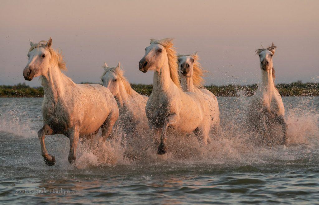horses_5-8839-Edit-1024x658.jpg